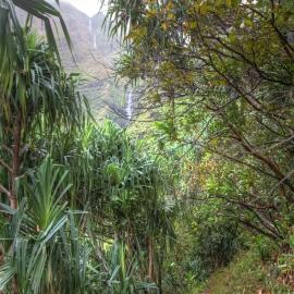 kauai_26.jpg