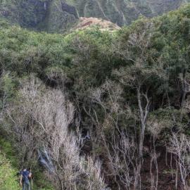 kauai_33.jpg